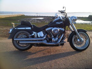 1900 harley fatboy softail etc anything (picture 6 of 6)